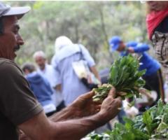 Venezuela. Plan Pueblo a Pueblo: Un modelo de producción agroalimentario comunal y soberano