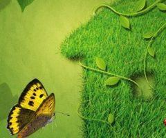 E-Book gratuito: Libro Verde de conflictos ambientales